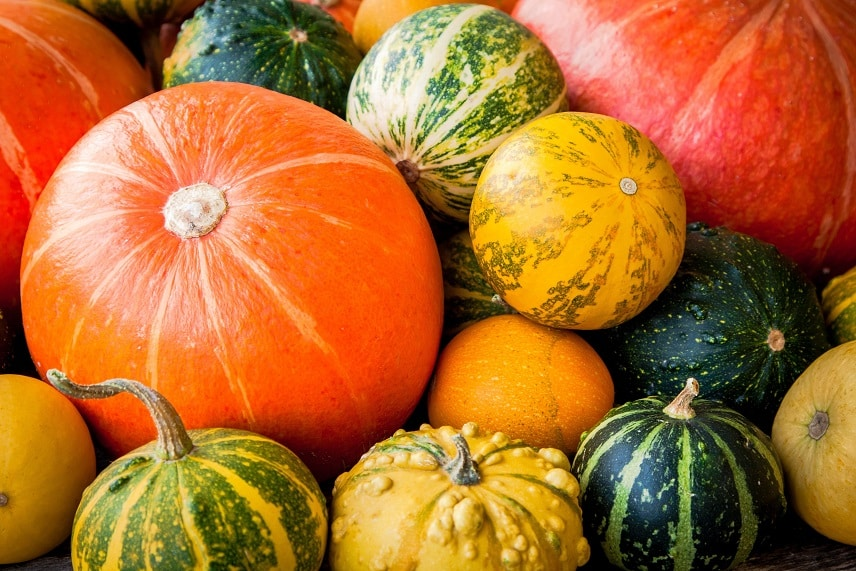 All About Winter Squash