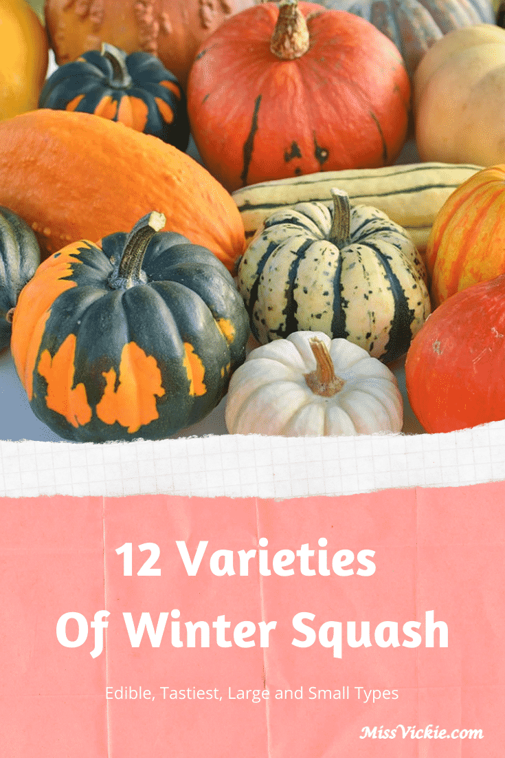 Varieties of Winter Squash