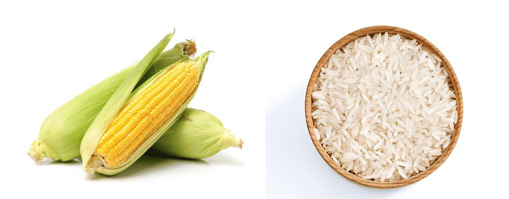 corn vs rice