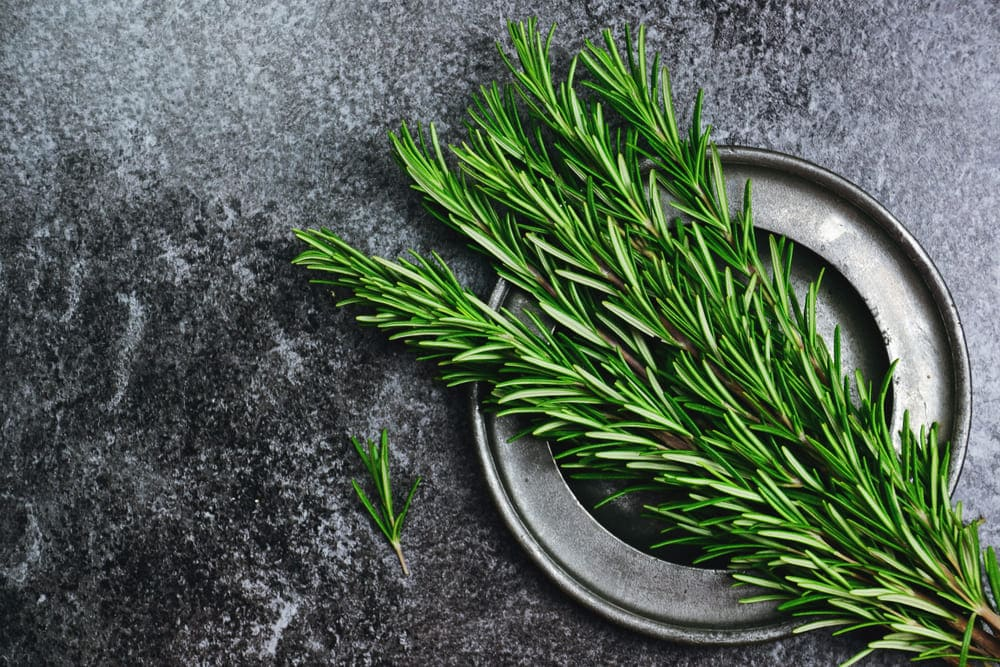 too much rosemary