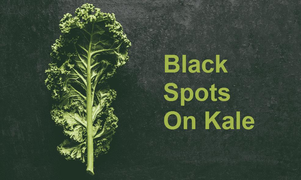 black spots on kale