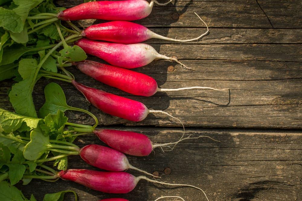 radish substitute