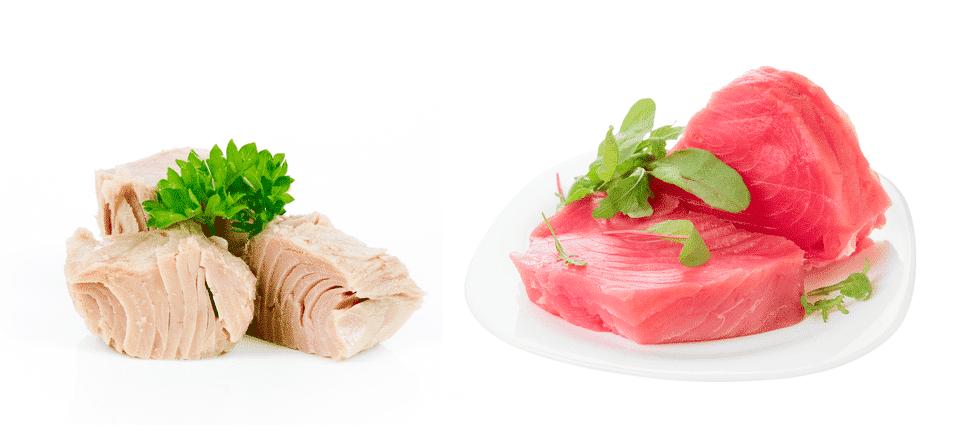 white tuna vs red tuna