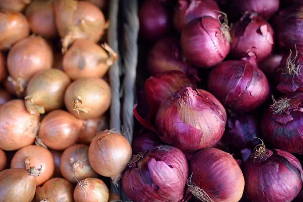 best onion for caramelizing