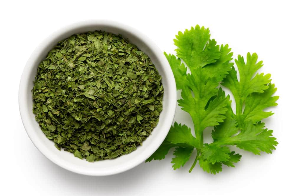 dried cilantro vs fresh