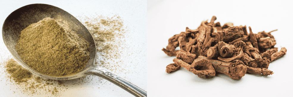 sassafras vs sarsaparilla