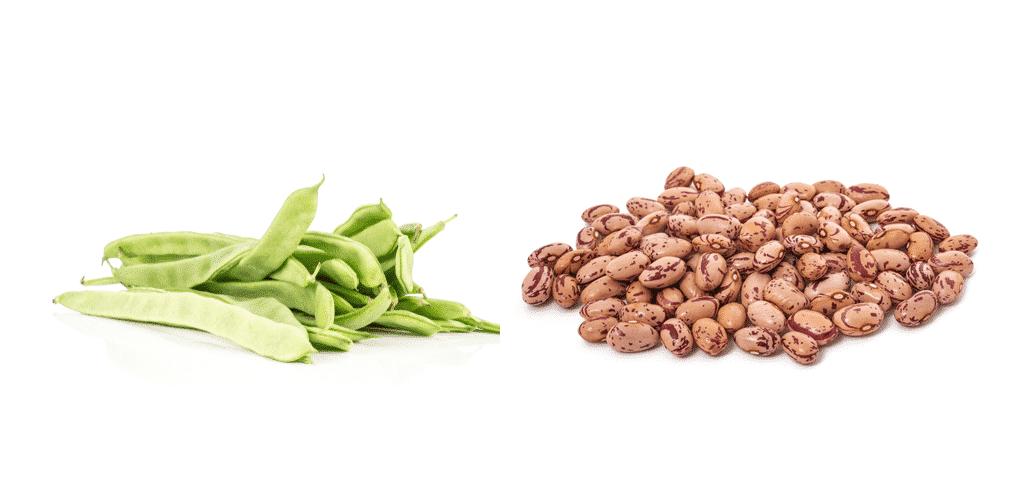 romano beans vs pinto beans