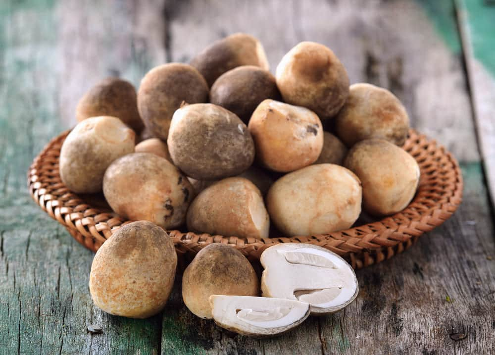 straw mushroom substitutes