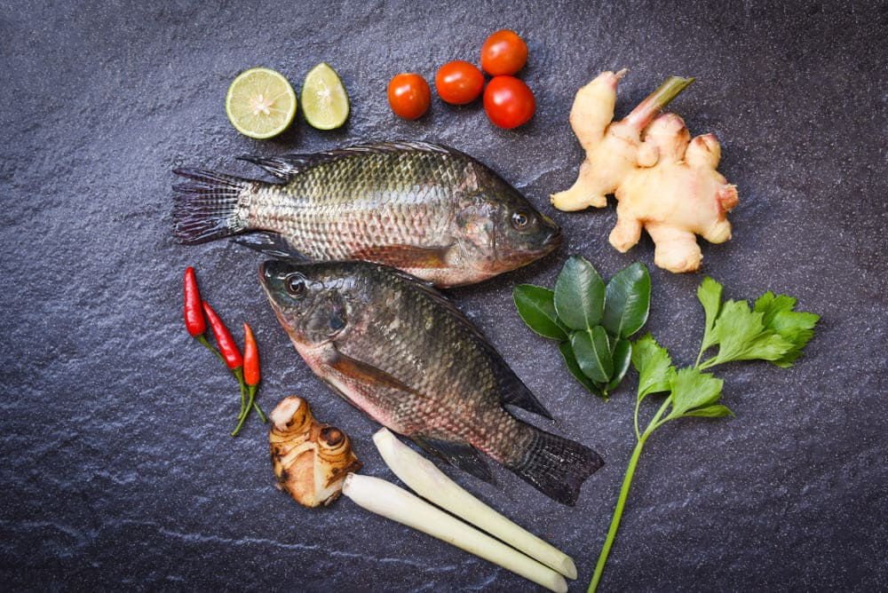 substitutes for tilapia