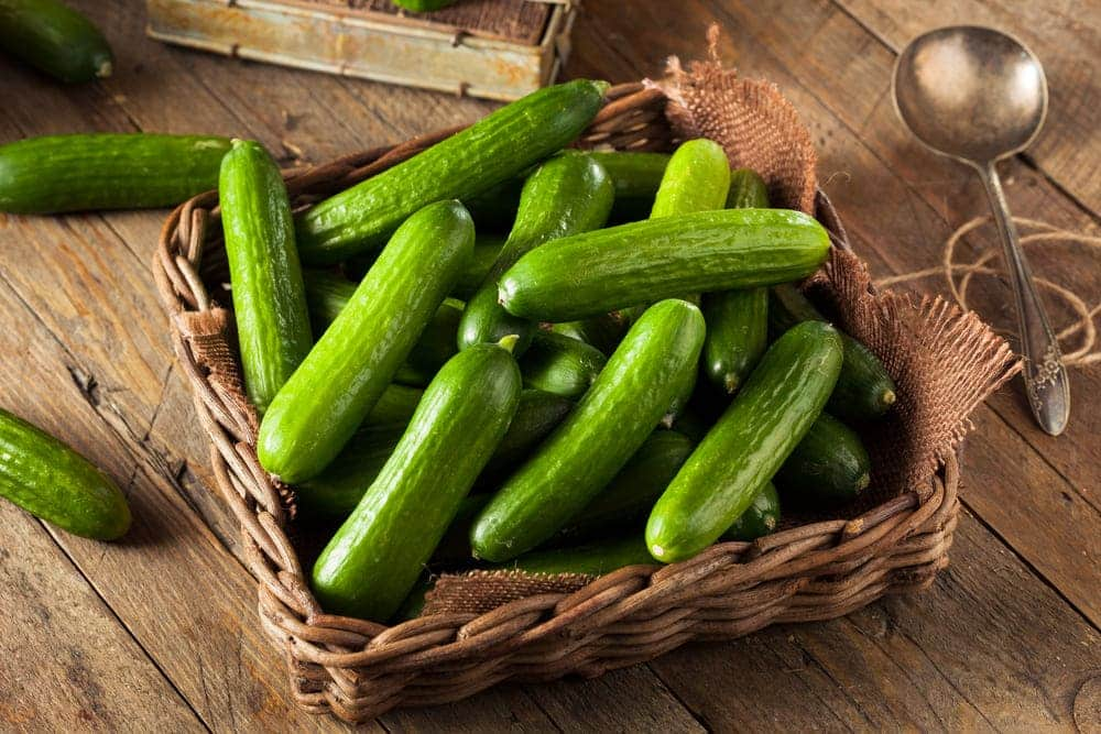 ways to cook cucumbers